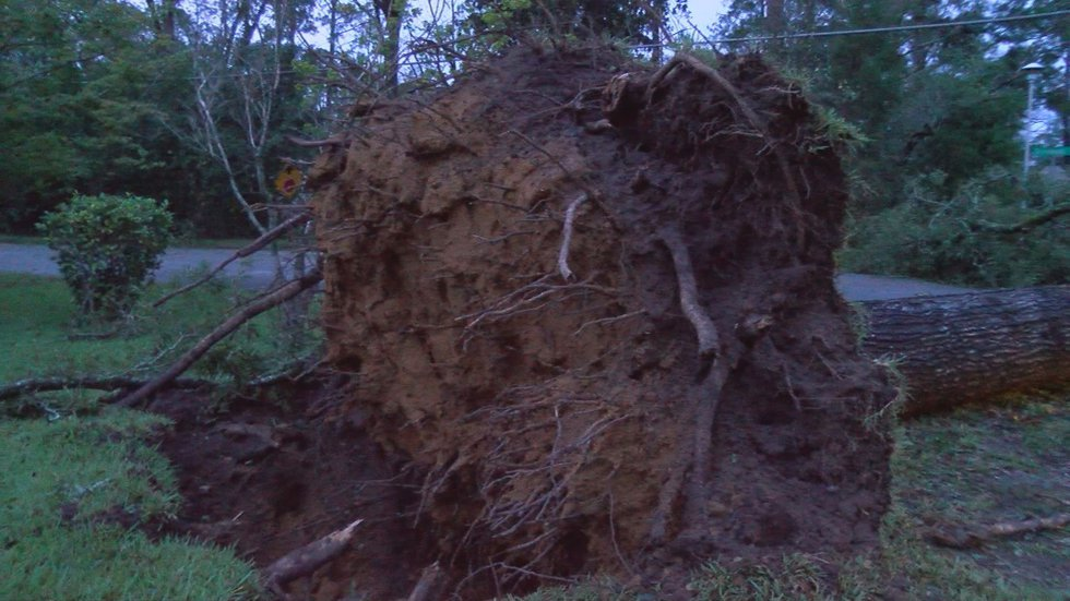 Downed trees were reported throughout Albany and Dougherty County from Hurricane Michael....