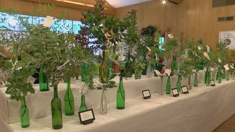Plants and flowers at the 98th Annual Standard Flower Show (Source: WALB)