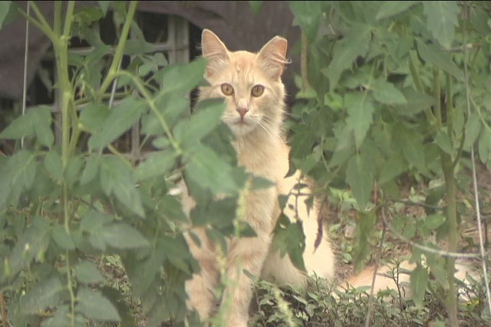 Dougherty Co. Police are waiting for test results to see if cats are being poisoned