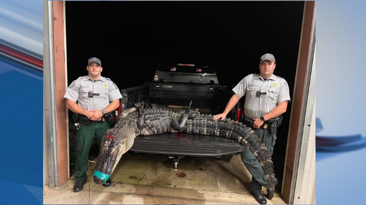 Two people were charged after killing an alligator out of season.