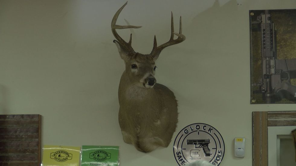 DNR officials say deer herds are stable in the state (Source: WALB)