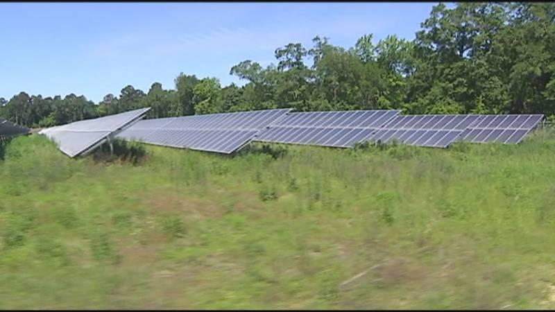A solar farm in Southwest Georgia. (Source: WALB)