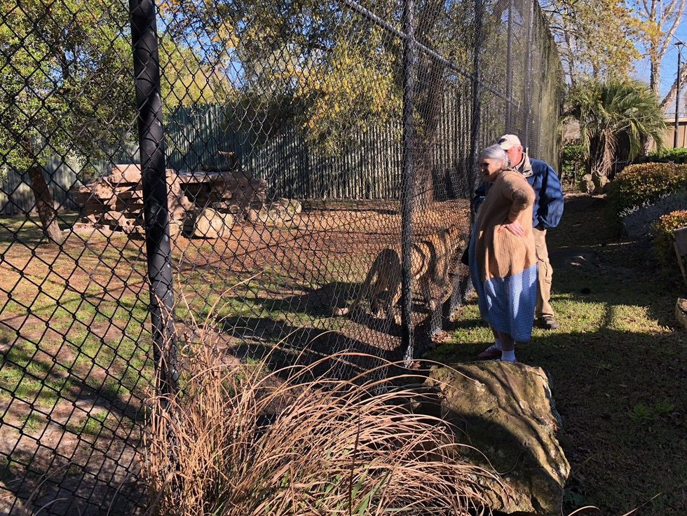 Jones meeting two lions face to face. (Source: WALB)
