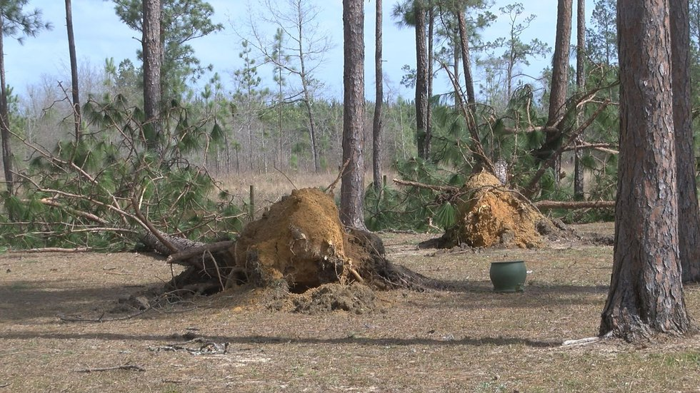Trees were seen toppled in Grady County after the storms. (Source: WALB)