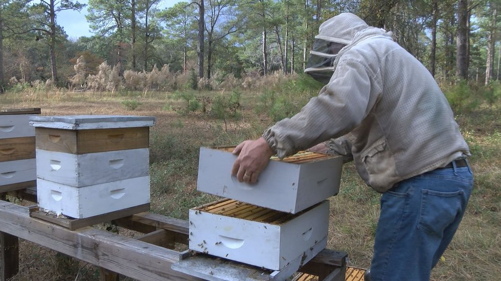 Beekeepers will assist bees during winter (Source:WALB)
