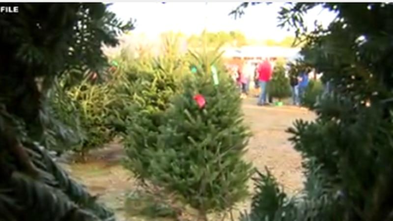 Avoiding Christmas tree fires ahead of the holiday