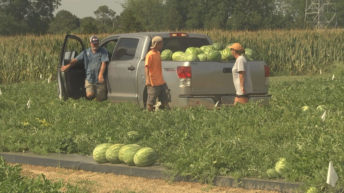 Data will benefit growers (Source:WALB)
