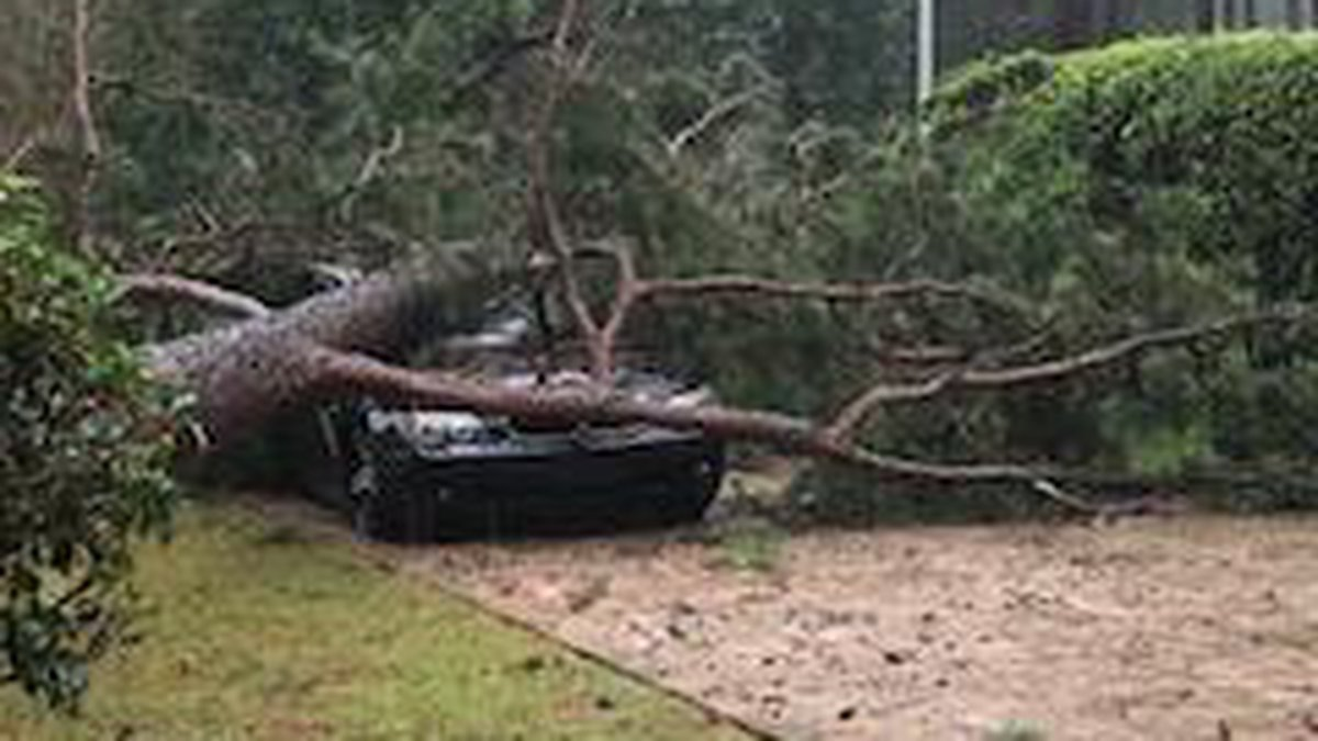 Damage in Dougherty County (Source: Latasha Griffin)