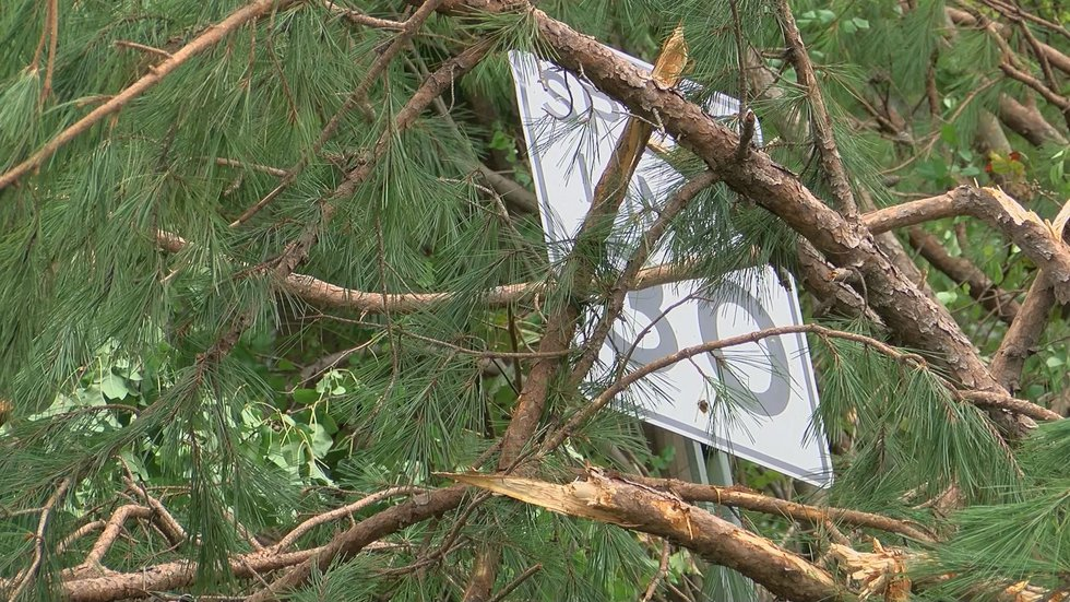 Hurricane Michael brought widespread damage in Albany and Dougherty County. (Source: WALB)