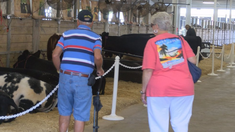 The fair includes a number of livestock exhibits. (Source:WALB)
