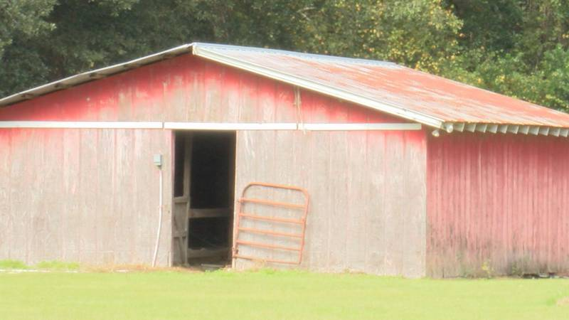 An Ocilla man is searching for answers after finding his horse dead from what appeared to be a...