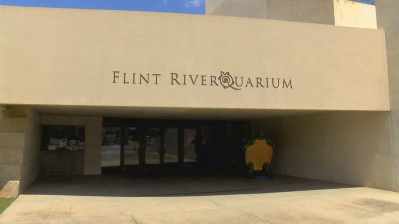 The Flint RiverQuarium is continuing activities for kids during the pandemic.